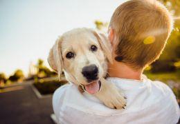 4 dicas para manter a saúde do cachorro em dia