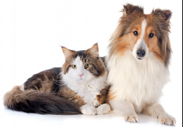 Confira a idade ideal para castrar o seu pet