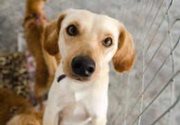 Confira alguns sites para adotar cachorro sem sair de casa