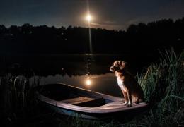 Cachorro enxerga no escuro?