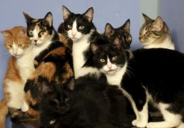 Moradora vai parar na justiça por criar 60 gatos em apartamento