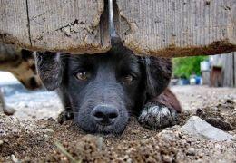 Comissão do Rio denuncia aumento de abandono de animais