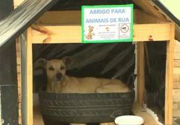 Família constrói casinhas para abrigar animais de rua no inverno