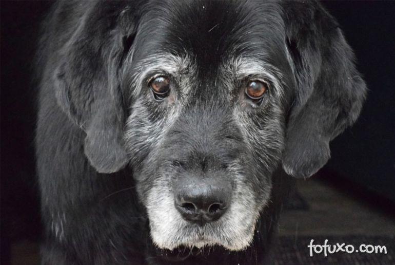 Entenda o que é a Disfunção Cognitiva de Alzheimer em cães