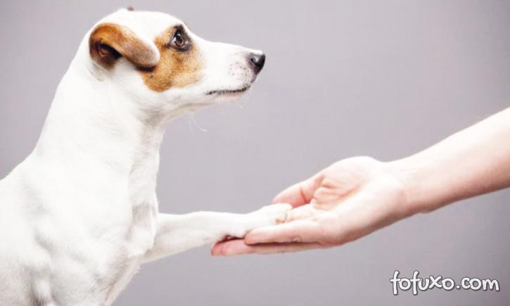 Confira alguns sinais de que o seu cachorro precisa de um adestrador