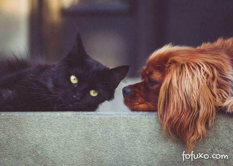 Donos de pets consideram saúde de animal tão importantes quanto da família