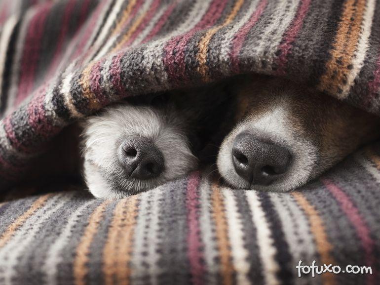 Dicas para cuidar da pele do seu cachorro no inverno