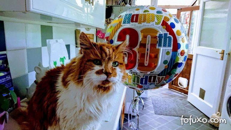 Morre o gato considerado mais velho do mundo