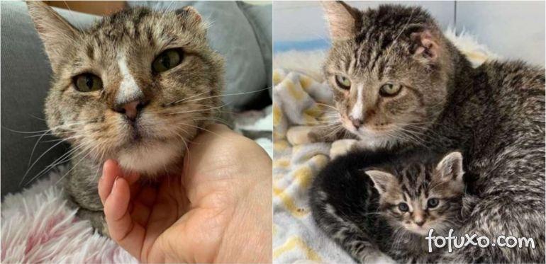 Gatinho resgatado passa a cuidar de outros gatinhos abandonados