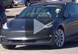 """Cachorro é flagrado """"dirigindo"""" um Tesla Model 3"""