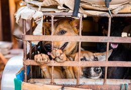 Província do Camboja proíbe consumo de carne de cachorro