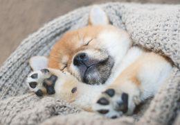 Dicas para fazer o cachorro dormir sozinho