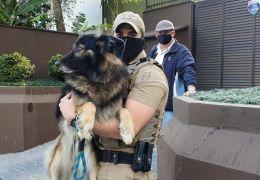 Cachorro é resgatado após ficar um mês sozinho em casa