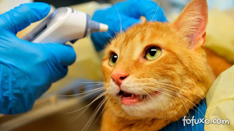 Gato é diagnosticado com Covid-19 no Reino Unido