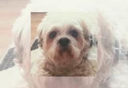 Cachorro entra na Justiça por indenização contra pet shop