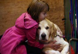 5 maneiras de acalmar o seu cachorro em momentos de estresse