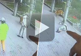 Gato cai na cabeça de idoso e briga com cão de estimação do homem