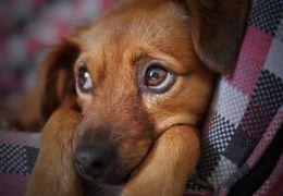 Cachorro teimoso e não escuta? Confira dicas do que fazer!