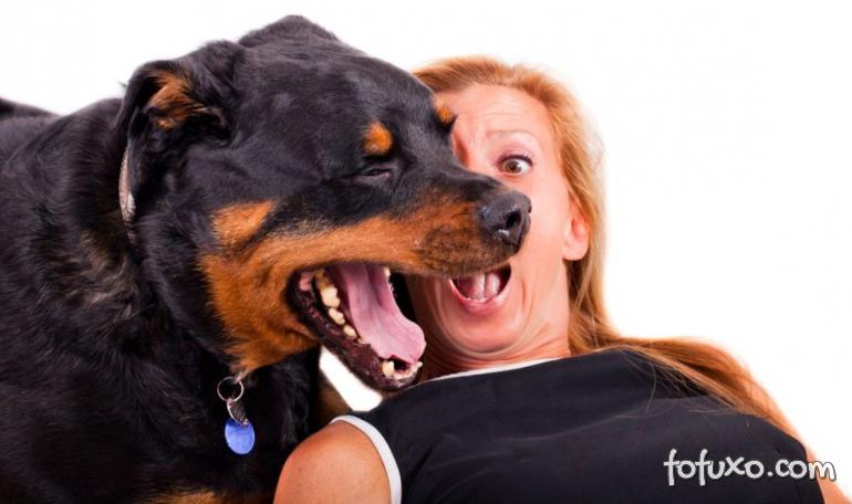 4 opções naturais para eliminar o mau hálito do seu cão