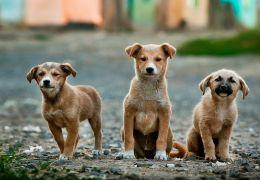 Vereadores de cidade em SC aprovam lei que proíbe cachorro de latir