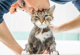 Confira algumas dicas para ajudar na higiene de gatos que não conseguem se limpa