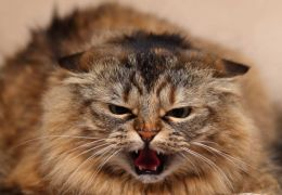 5 coisas que os gatos costumam odiar