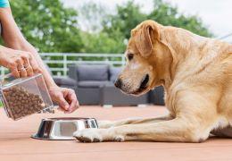 Confira algumas dicas para fazer seu cachorro comer mais devagar
