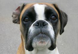 3 descobertas sobre os cães que vão te surpreender