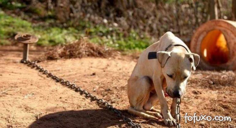Senado aprova pena maior para maus tratos contra cães e gatos