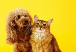 Dicas para limpar pelo de cães e gatos da casa e das roupas