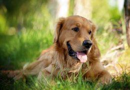 Confira os nomes de cachorros mais populares do Brasil em 2020