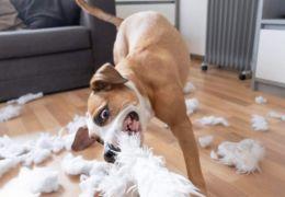 Brinquedos: pode dar pelúcia para os cães?