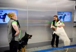 Projeto da Finlândia utiliza cães para detectar coronavírus