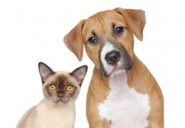 Diabetes em pets: confira dicas para uma alimentação ideal