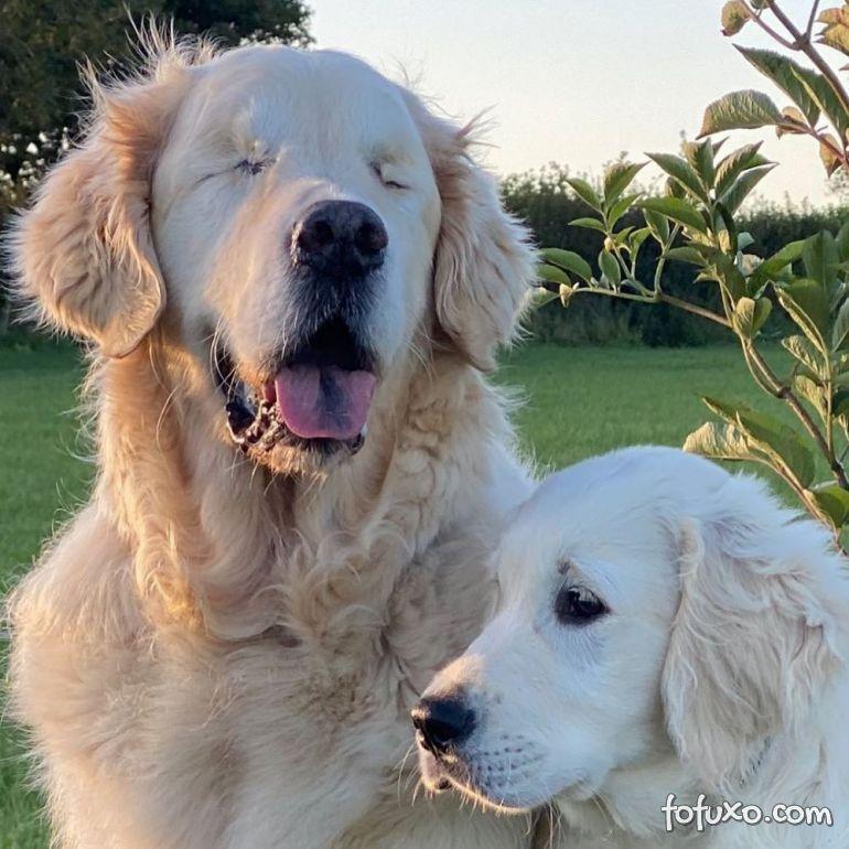 Cachorro cego ganha o seu próprio cão-guia
