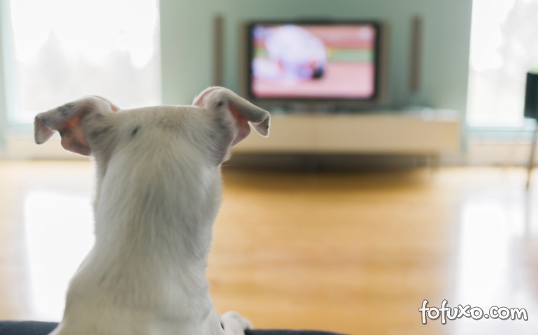 Por que alguns cachorros latem para televisão?