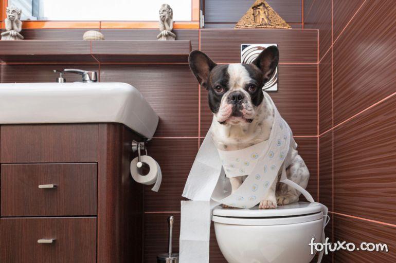 4 Dicas certeiras para ajudar seu cão a fazer as necessidades no lugar correto
