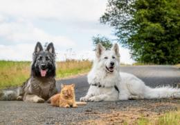 Conheça a história do gato que pensa que é cachorro