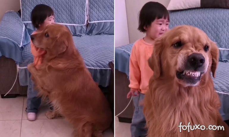 Golden Retriever defende menina de bronca da mãe