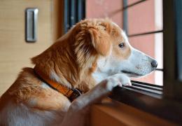 Pesquisa indica que cães também passam por crise de meia idade