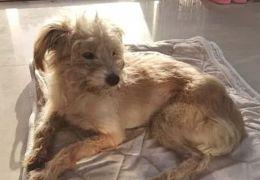 Cachorro percorre 60 km e consegue voltar para depois de ser esquecido