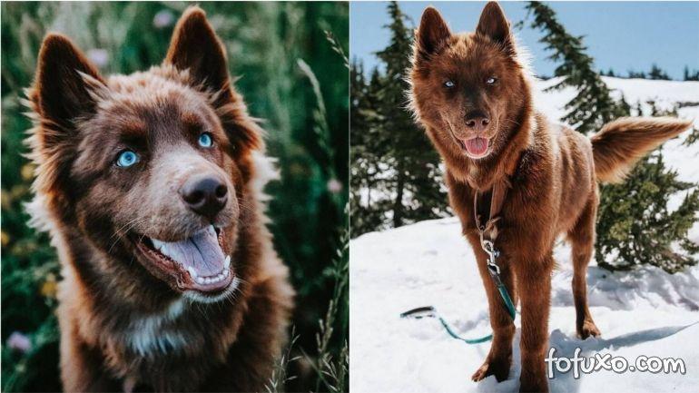 Husky assusta aventureiros durante trilhas