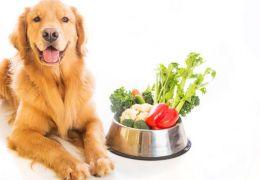 Confira uma receita de bolinho vegano para o seu pet