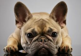 Tutor é condenado e indenizar casal que encontrou cachorro perdido