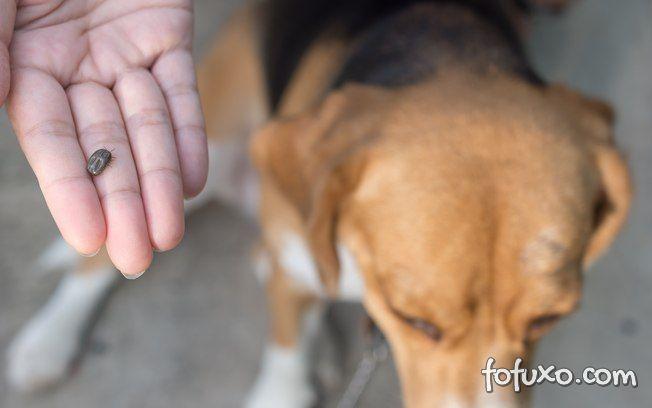 Carrapato: Saiba o que NÃO fazer com o seu cão nestes casos