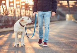 Pressão alta em cachorros: Saiba reconhecer os sintomas