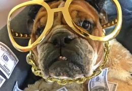 Cachorro de Lewis Hamilton se torna celebridade nas redes sociais