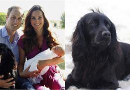 Morre Lupo, cachorro de Príncipe William e Kate Middleton