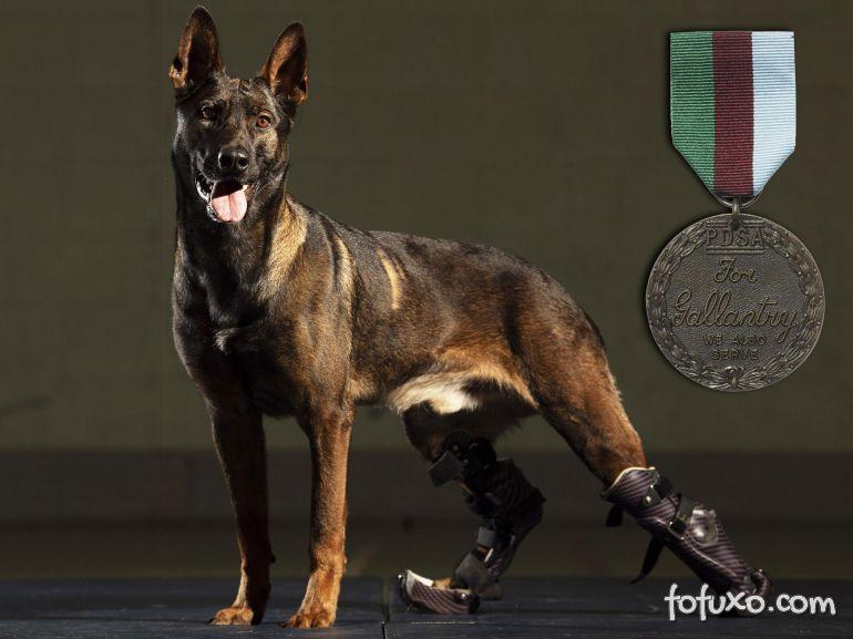 Cachorro com prótese nas patas ganha medalha britânica