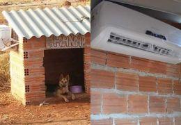Casa de cachorro com ar-condicionado viraliza na internet